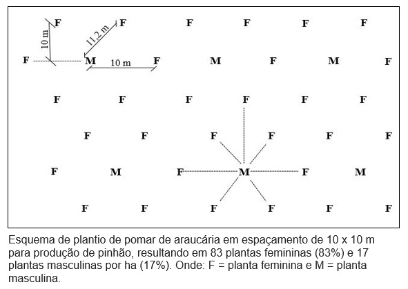 esquema_planio_pomar_araucaria.jpg