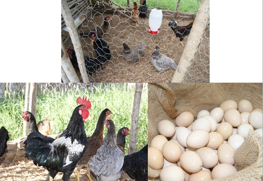 aves1.jpg